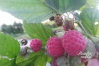 Vaisių ir uogų tyrelė mažyliui