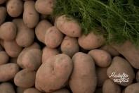 Bulvės mažyliui