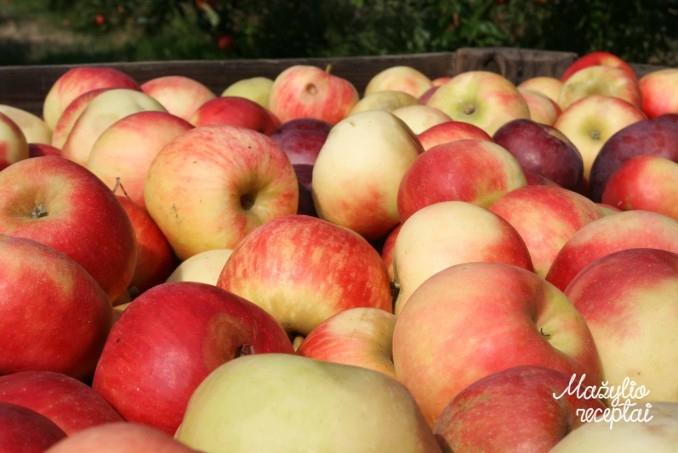 Obuoliai mažyliui
